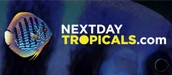 nextdaytropicals ebay design